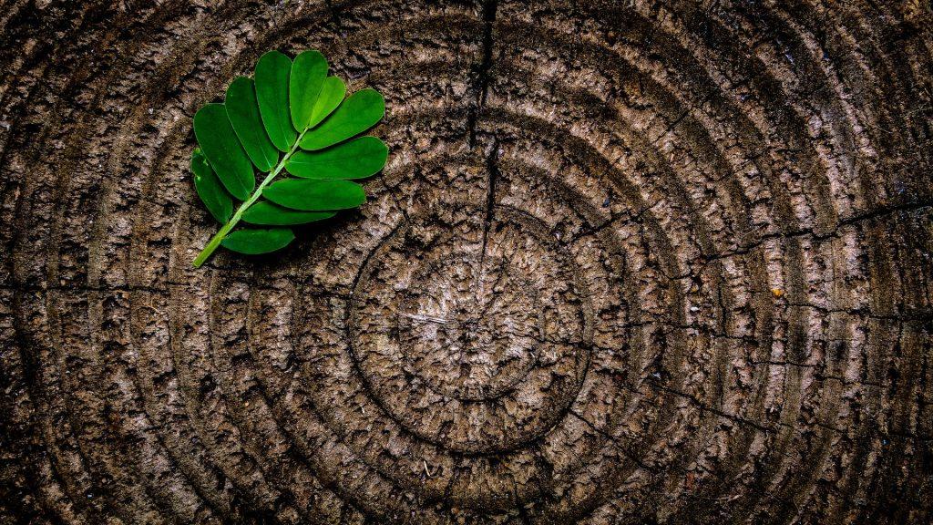 Bois, matériau de construction écologique et durable