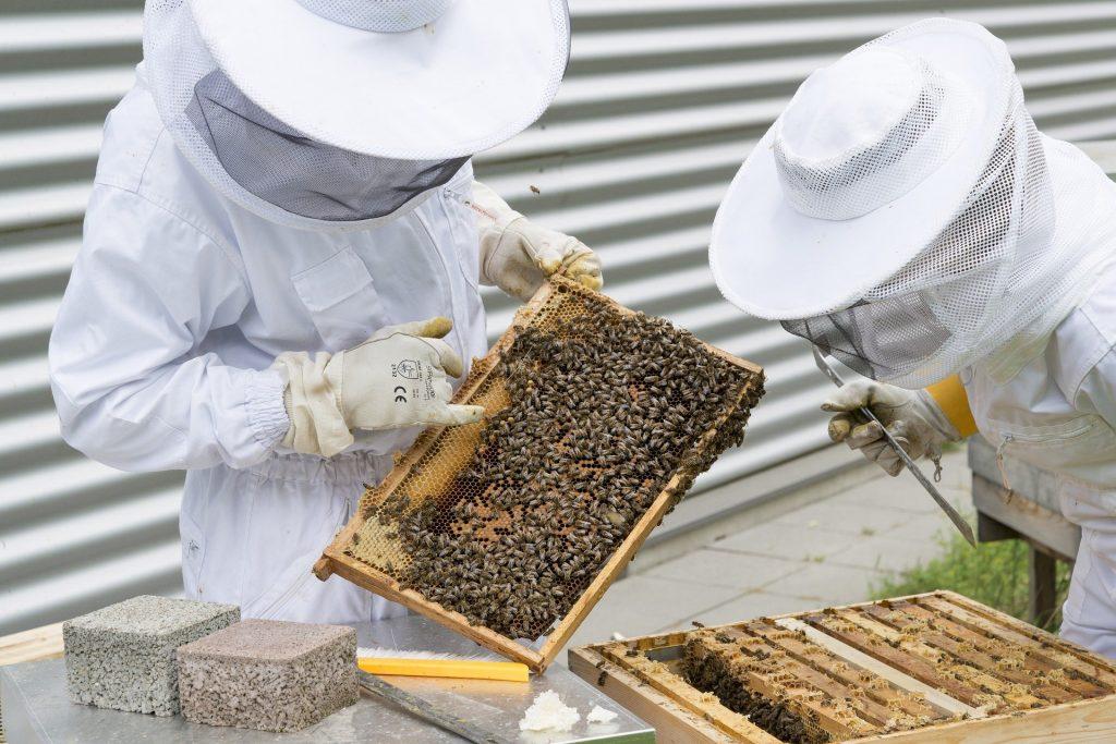 Apiculteurs inspectant une ruche.