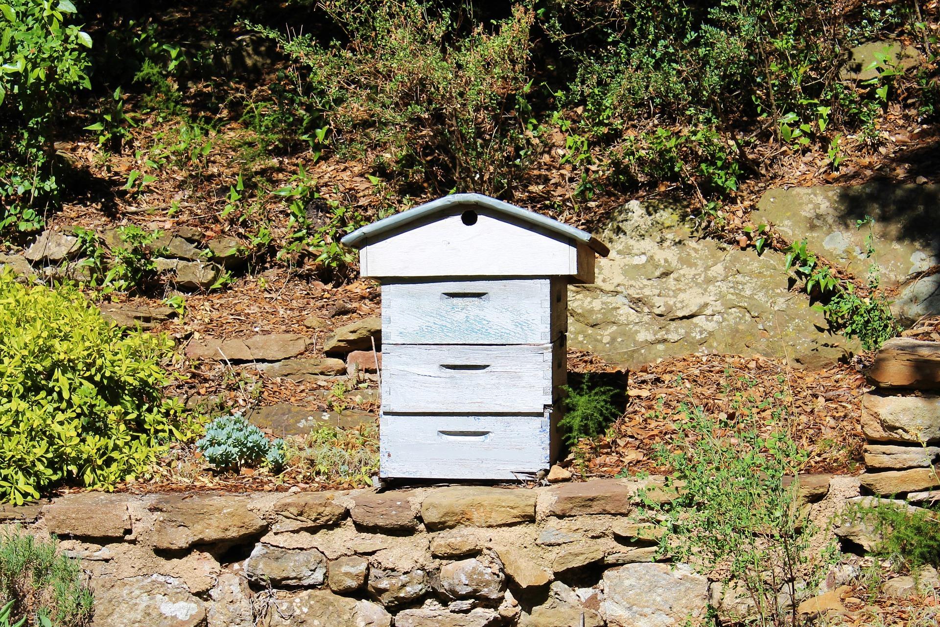 Une ruche dans un jardin écologique.